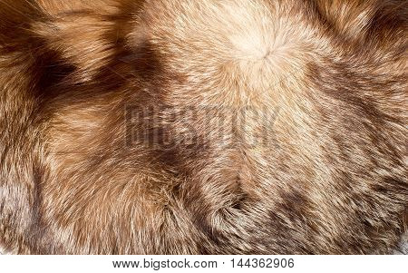 Fur. The Coat Of The Animal. Texture Background