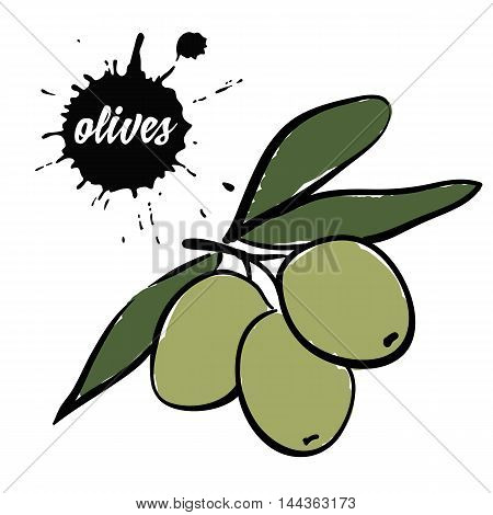 Isolated eco natural food berries green olives