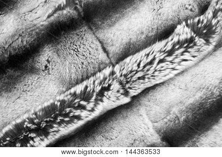 Rabbit Fur Texture, Background