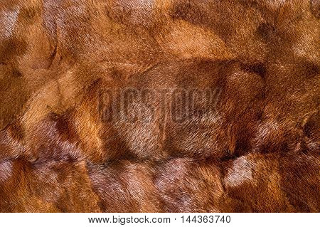 Texture, Background. Mink Brown
