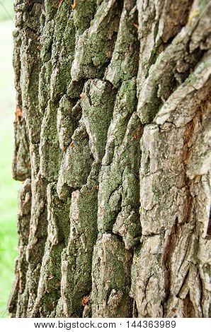 Background Texture. tree bark. , closeup, natural, wooden,