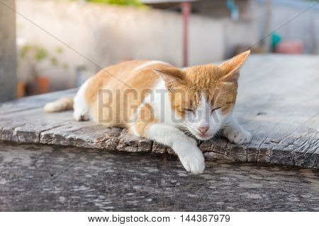Cute little kitten sleeps with hang leg on wooden table.