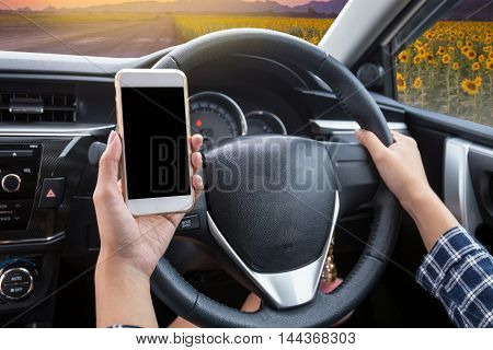 Young woman driver using touch screen smartphone and hand holding steering wheel in a car with sunflower field at twilight time background