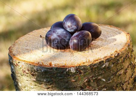 Plums On Wooden Stump In Garden On Sunny Day