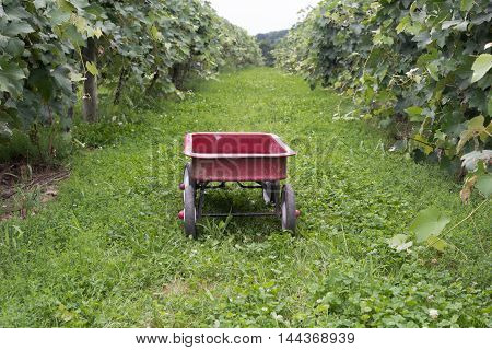 Little red wagon at pick-you-own farm in the middle of vineyards