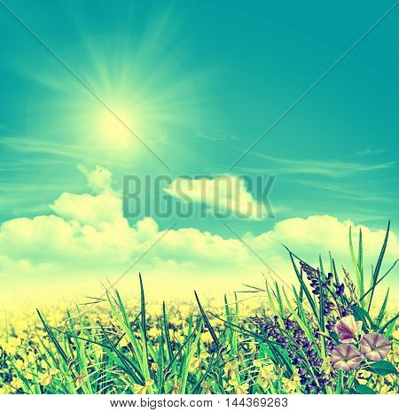 Summer landscape with field flowers on a background of blue sky and clouds