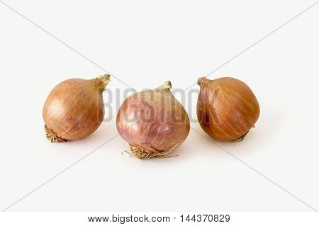 Three whole ripe onions on a white background