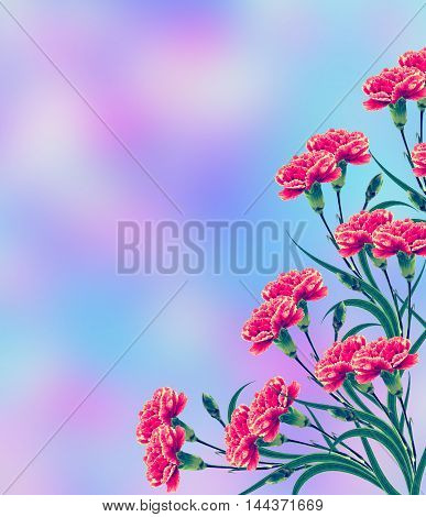 branch bright colorful flowers carnations. Summer. nature.