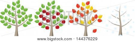 Fruit tree in spring summer autumn and winter. On a white background.