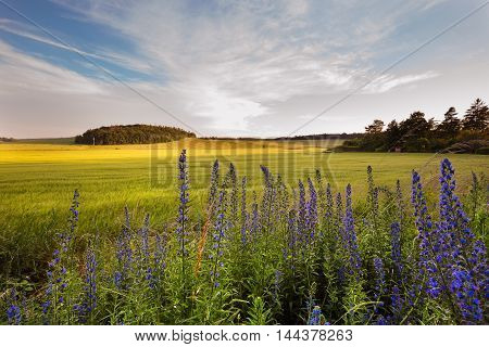 Field and meadow flowers Holubice. Moravian landscape.