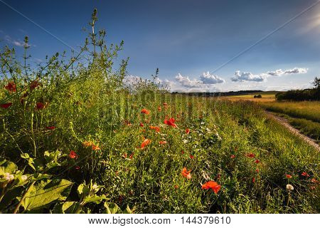 Field and meadow flowers. Moravian landscape Boskovice.