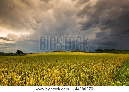 Dense clouds and grain field. Moravian landscape Obora.