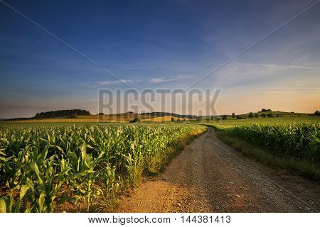 Dirt road and fields of corn. Moravian landscape Rozsicka.