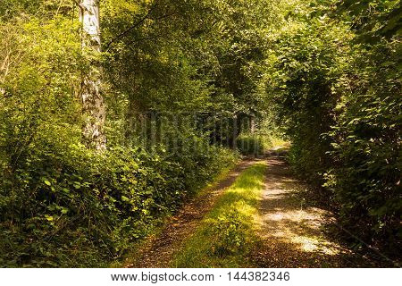 Forest path bathed in sunlight. Moravian landscape Boskovice.