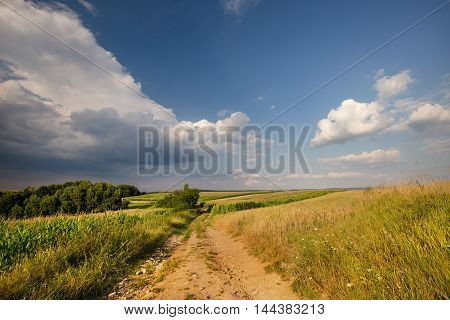 Dirt road and fields with corn. Moravian landscape Boskovice.
