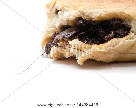 Cockroaches Small Animals Distract A Annoying Causes Of Disease Perched On A Raisin Bread.