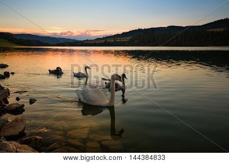 Idyllic moments on the water. Sunset and swans. Water reservoir Kretinka. Moravian landscape.