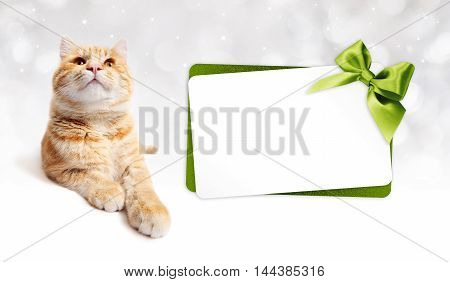ginger cat and gift card with green ribbon bow Isolated on white