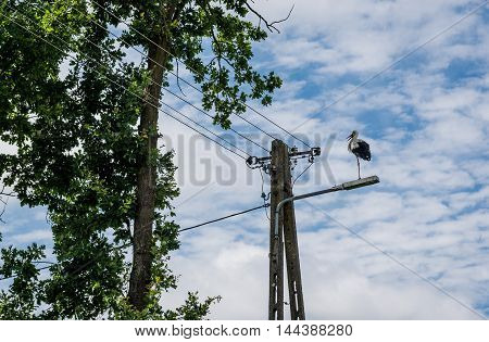 White stork in small village in Poland