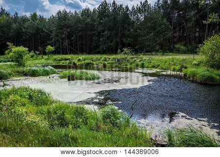 small pond on a meadow in Mazowsze region in Poland