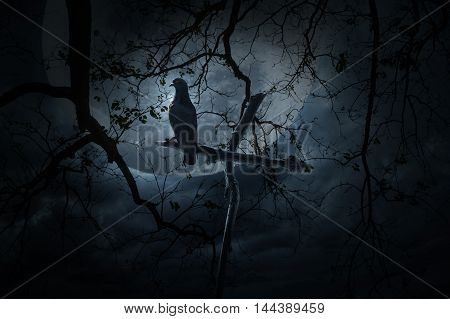 Seagull bird stand on wood cross over dead tree moon and cloudy sky Mystery background Halloween concept