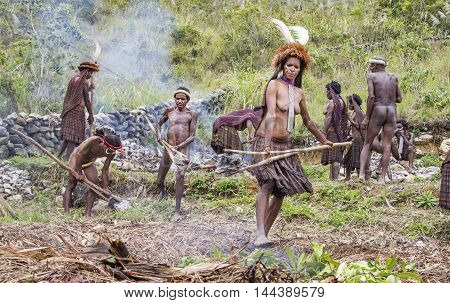 Baliem Valley West Papua Indonesia February 15th 2016: dani Dribe people are preparing a hole with hot stones to cook a pig