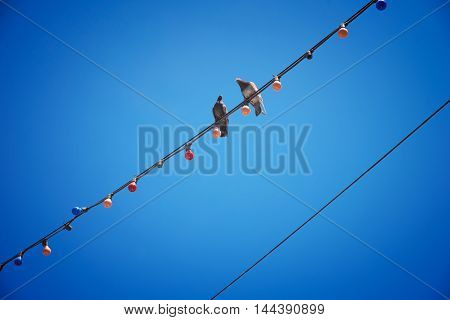 two pigeons sitting on wires against the blue sky