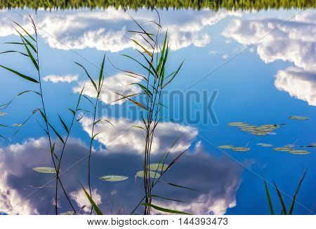 Magic reflection of reeds distant forest and blue cloudy sky in the mirrored water of a lake.