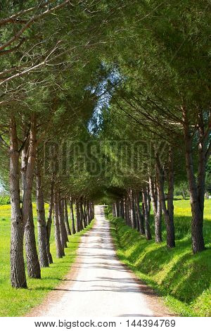 Country road lined with trees
