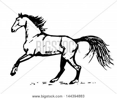 Graphic image of a horse on a white background. Abstract illustration vector