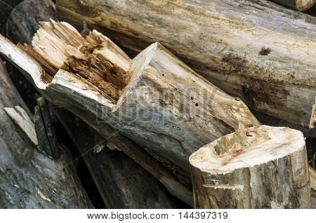 Closeup of recently chopped logs and firewood