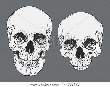 Hand Drawn Line Art Anatomically Correct Human Skulls Set Isolated Vector