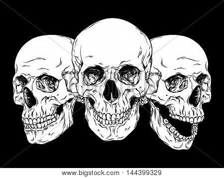 Human Skulls Hand Drawn Line Art Anatomically Correct