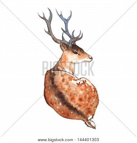 Watercolor deer with horns wood animal isolated