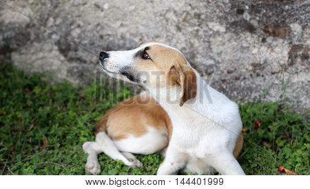 picture of a stray dog scratcing fur with fleas