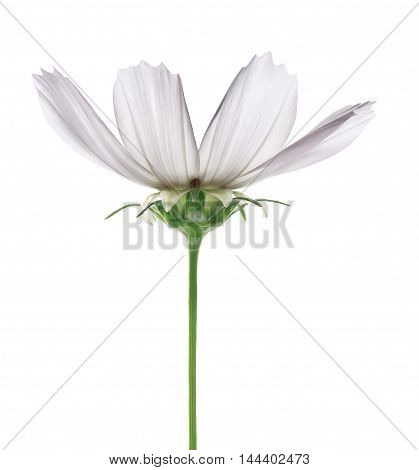 White flower with green stem on white background