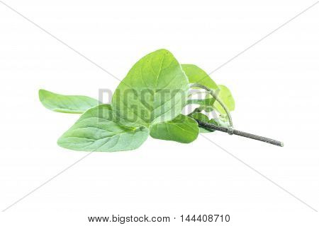 Oregano Leaf Herb Food  Ingredient Top View