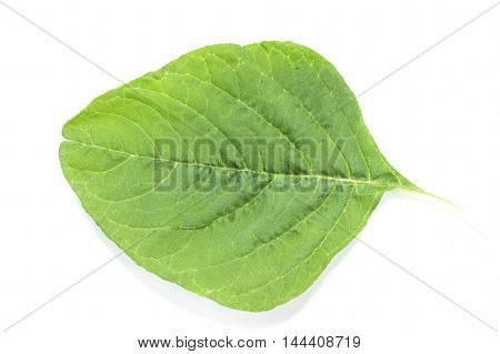 Spinach Leaf Vein Close Up