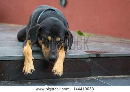 Black dog sleeping on the black staircase
