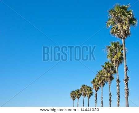 Palm Tree Blue Sky Frame