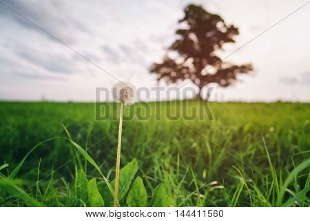 low angle view of oak and maple grow together on green field in sunset light