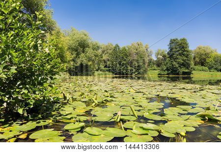 Pond with water lilies and clear sky