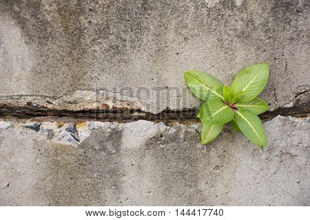 A Green plant glowing on concrete wall.