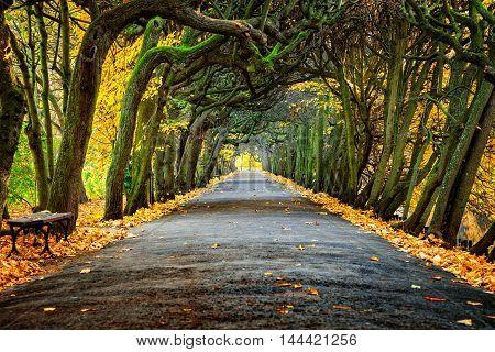Alley in the Oliwa park in autumn scenery. Oliwa Poland.