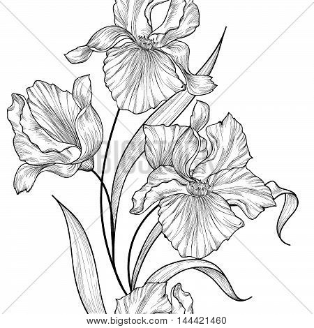 Floral seamless vertical decorative border. Flower iris etching background. Abstract floral ornamental pattern with flowers. Stylish spring flourish garden. Greeting card with fantastic flowers motif