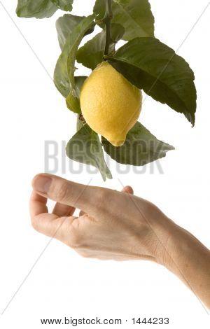 Picking A Lemon