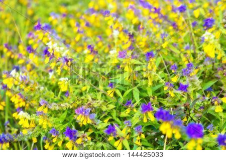 Abstract blurred view of summer field flowers and grass