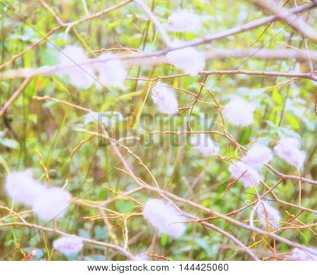 blurred white flowers, green leaves and branches background