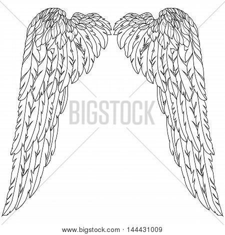 Angel wings, birds wings, feather wings, freedom wings, heaven wings, graphic wings, fairy wings, holy wings. Vector.