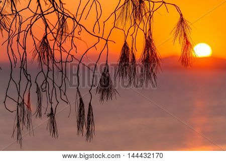Landscape With Pinetree At Sunset, Sithonia, Greece